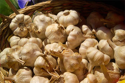 Garlic « PagansWorld org
